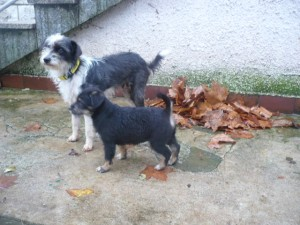 Mimma e cucciola